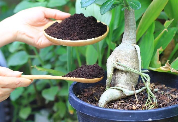 reutilizar posos café reciclar