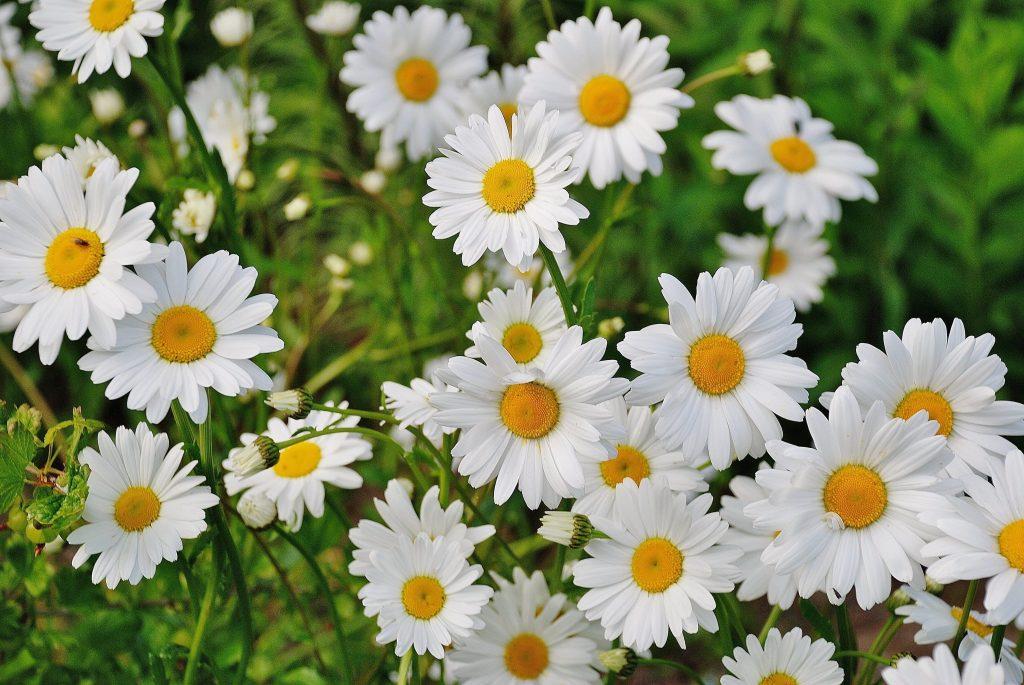 flores_decorar_jardín